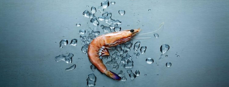 Shrimp astaxanthin.jpg