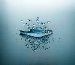 Qrill Aqua, krill in feed for marine fish
