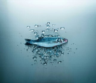 for fish