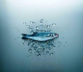 Qrill Aqua, krill in feed Para peces marinos