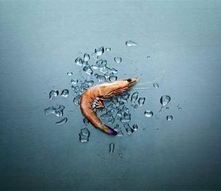 Qrill Aqua, krill in shrimp feed