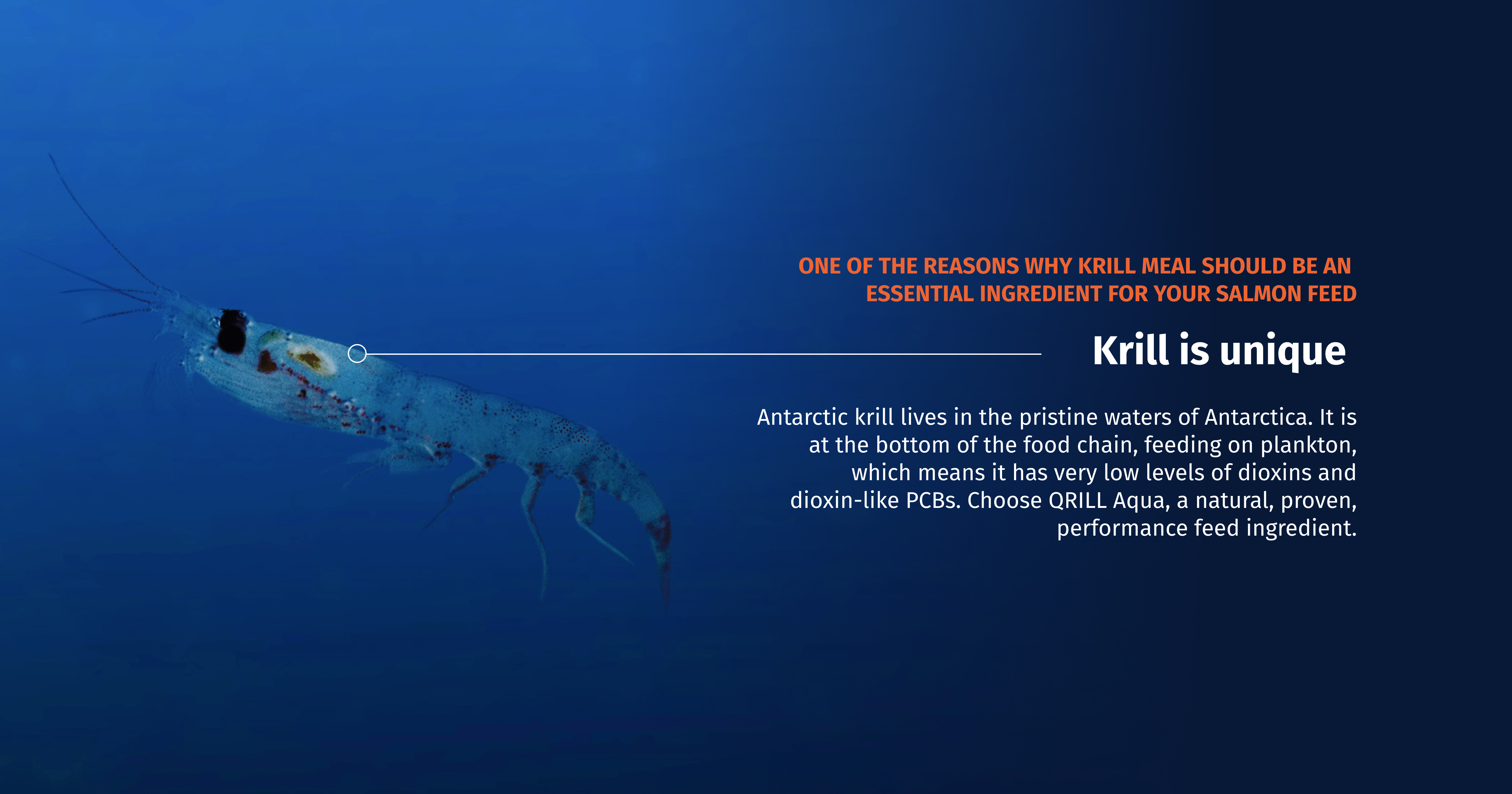 QRILL Aqua_Blog_10 reasons krill for your salmon feed_Image3.png