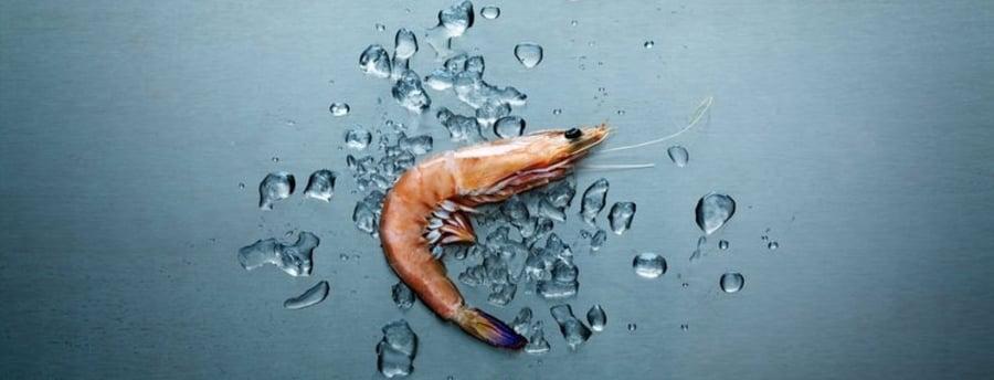 Shrimp astaxanthin