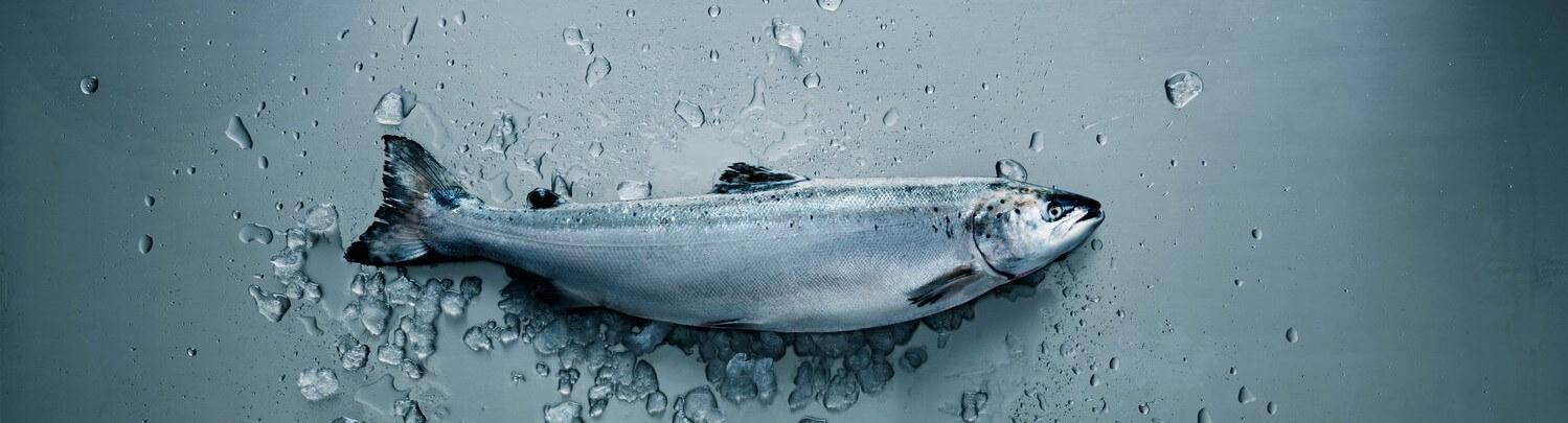 Salmon growth qrill aqua