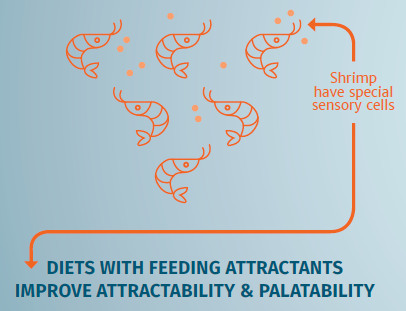 Shrimp sensory cells