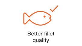 better-fillet-quality.jpg