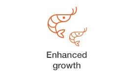 enhanced-growth shtimp.jpg
