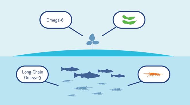 omega-3omega-6 landbasedand plantbased.png