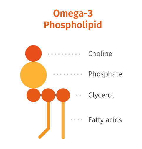 Omega-3 phospholipid .png