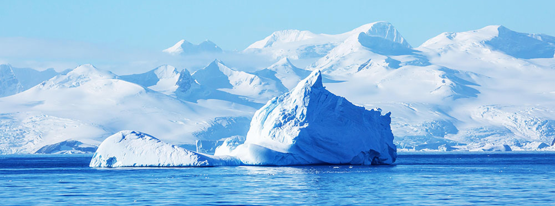 Antarctic krill Antarctica.jpg