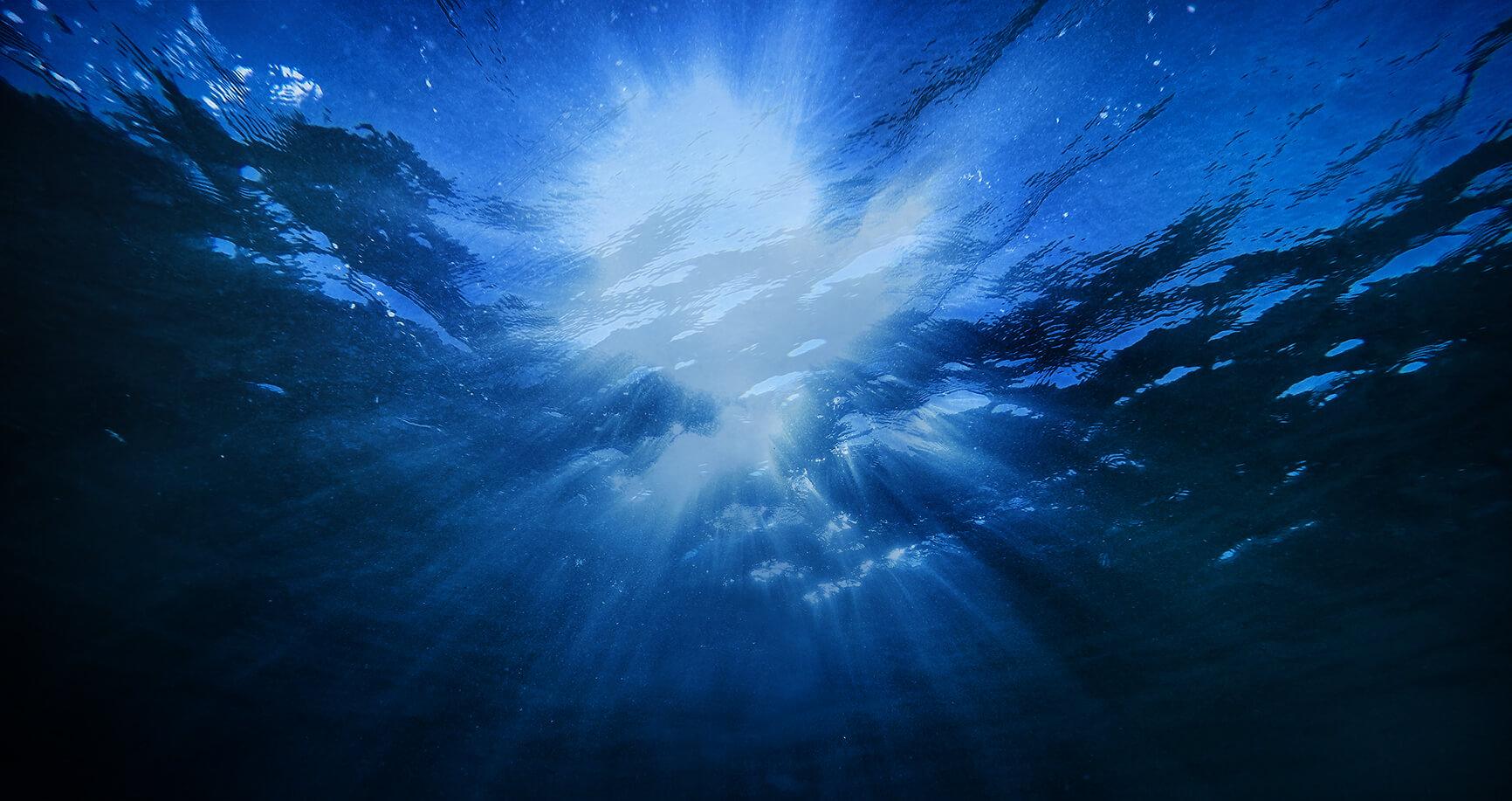 Qrill aqua - Antarctic krill in feed