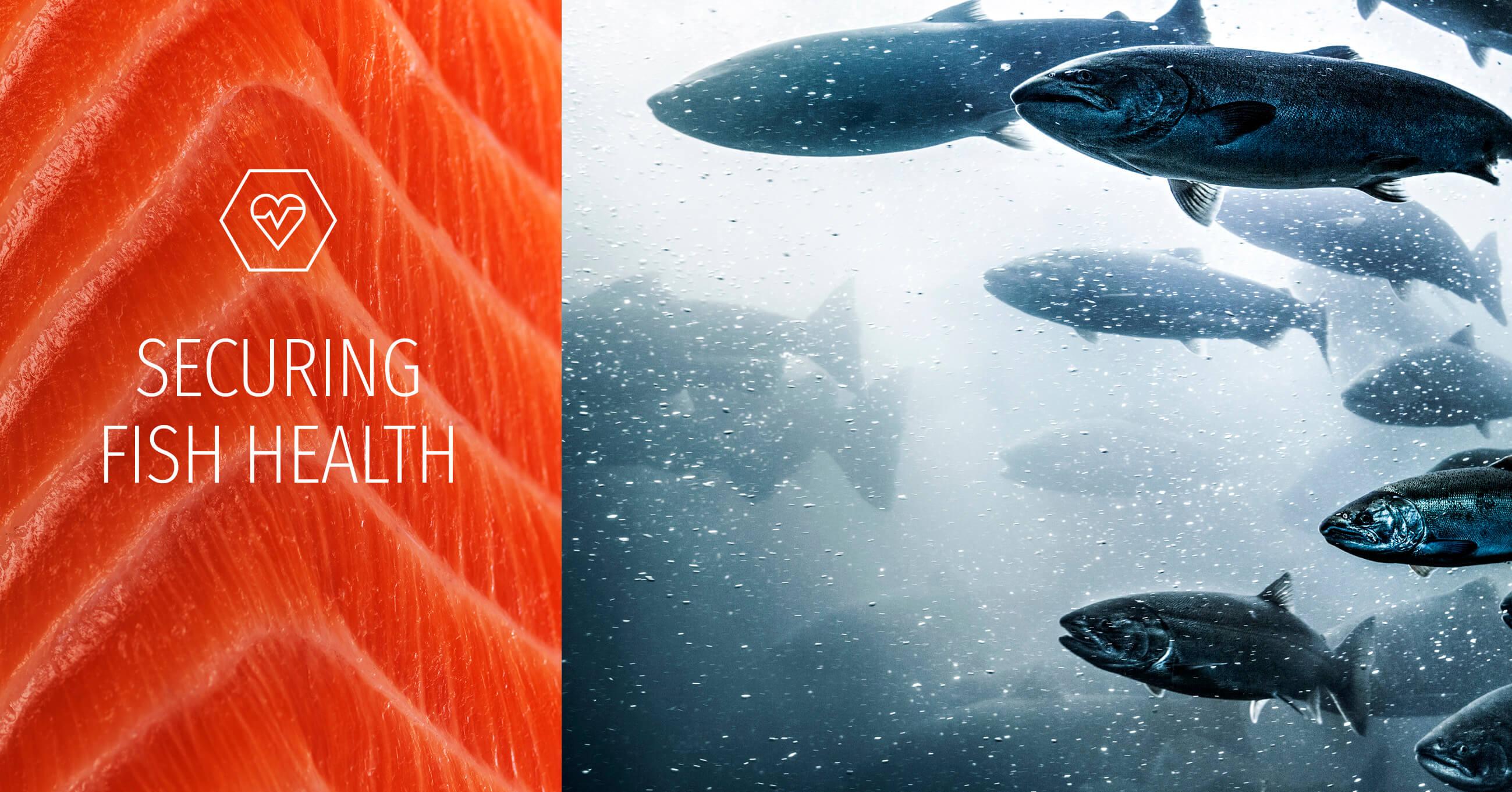 Qrill aqua for fish health and reduced mortality