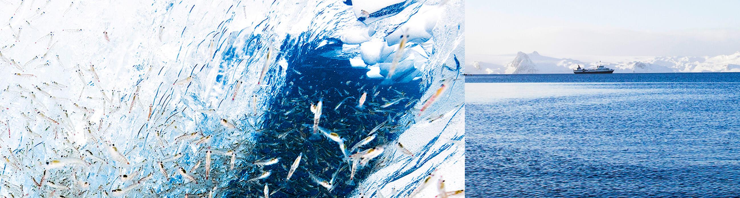 Qrill aqua - leading supplier of krill