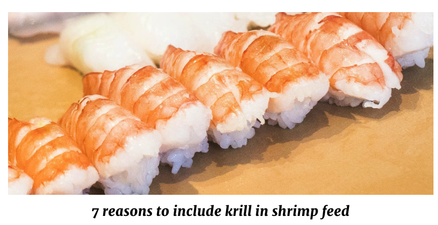 QRILL Aqua - 7 reasons to include krill in shrimp feed