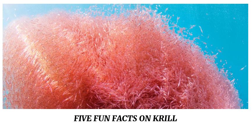 QRILL Aqua - Five fun facts on krill