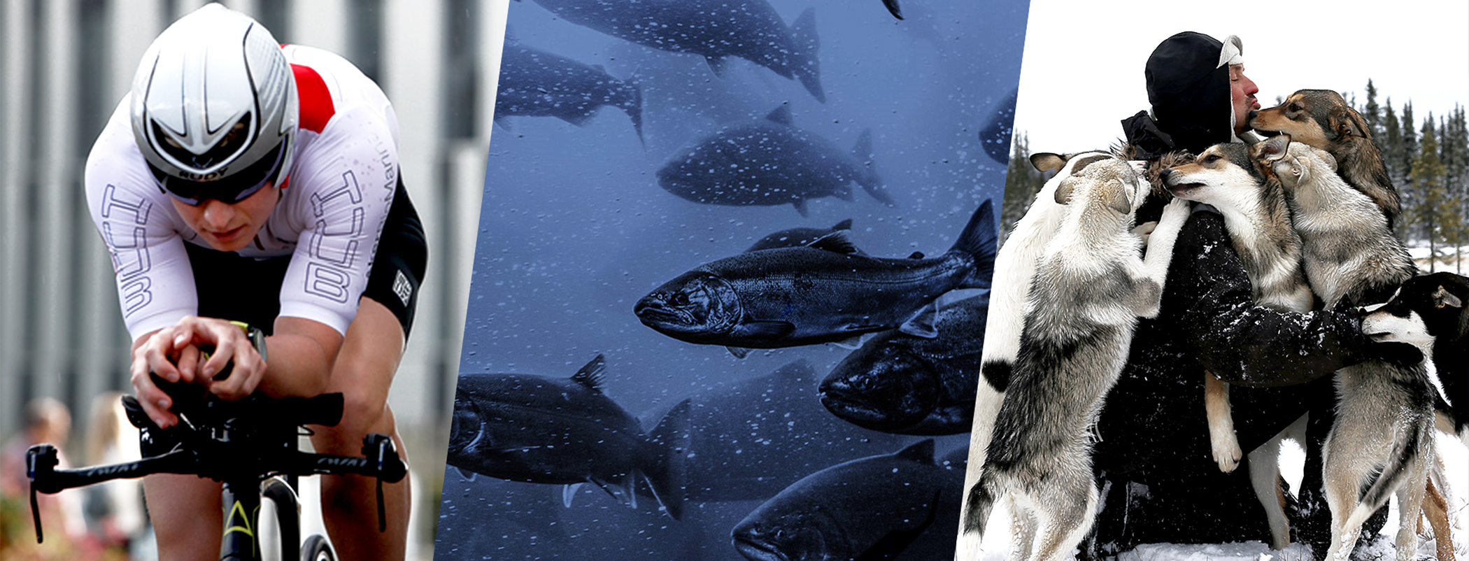 krill works for dogs, human sports and fish