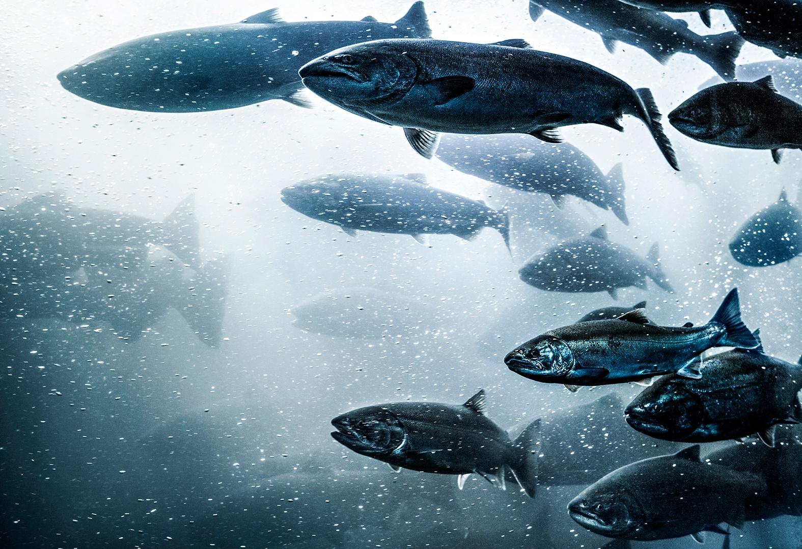 fish-farming.jpg