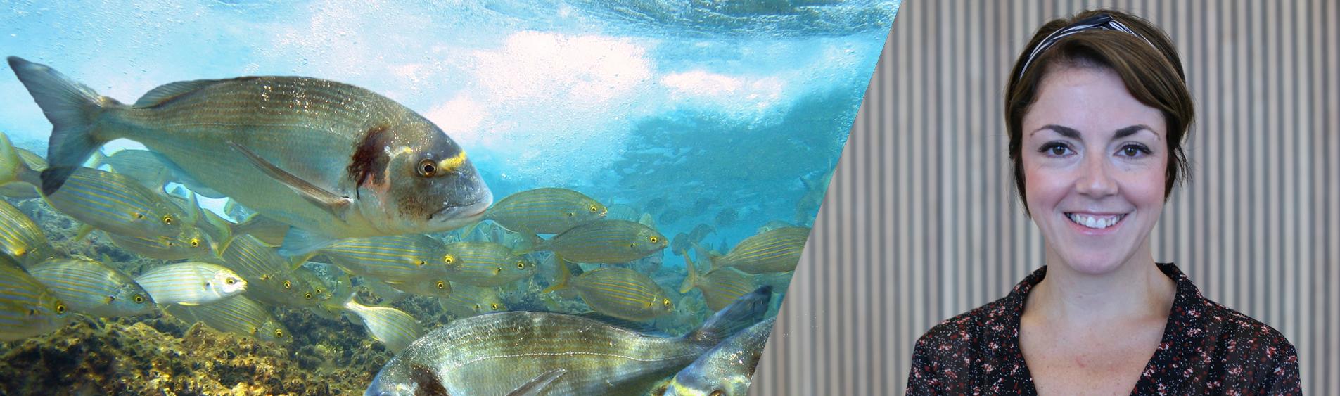 seabream krill science
