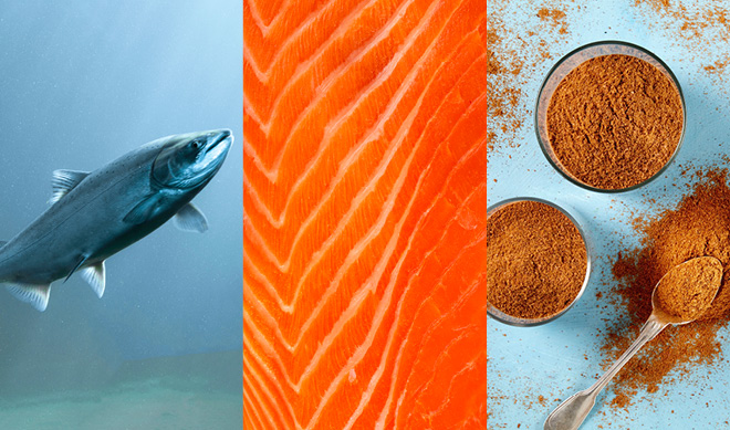 QRILL Aqua_Blog_10 reasons krill for your salmon feed_Image2